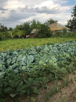 Grădină (Garden)